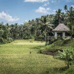 Palm Plantation Indonesia