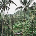 Bali Swing Indonesia
